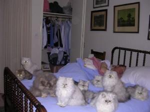 Bedcats_naps[1]