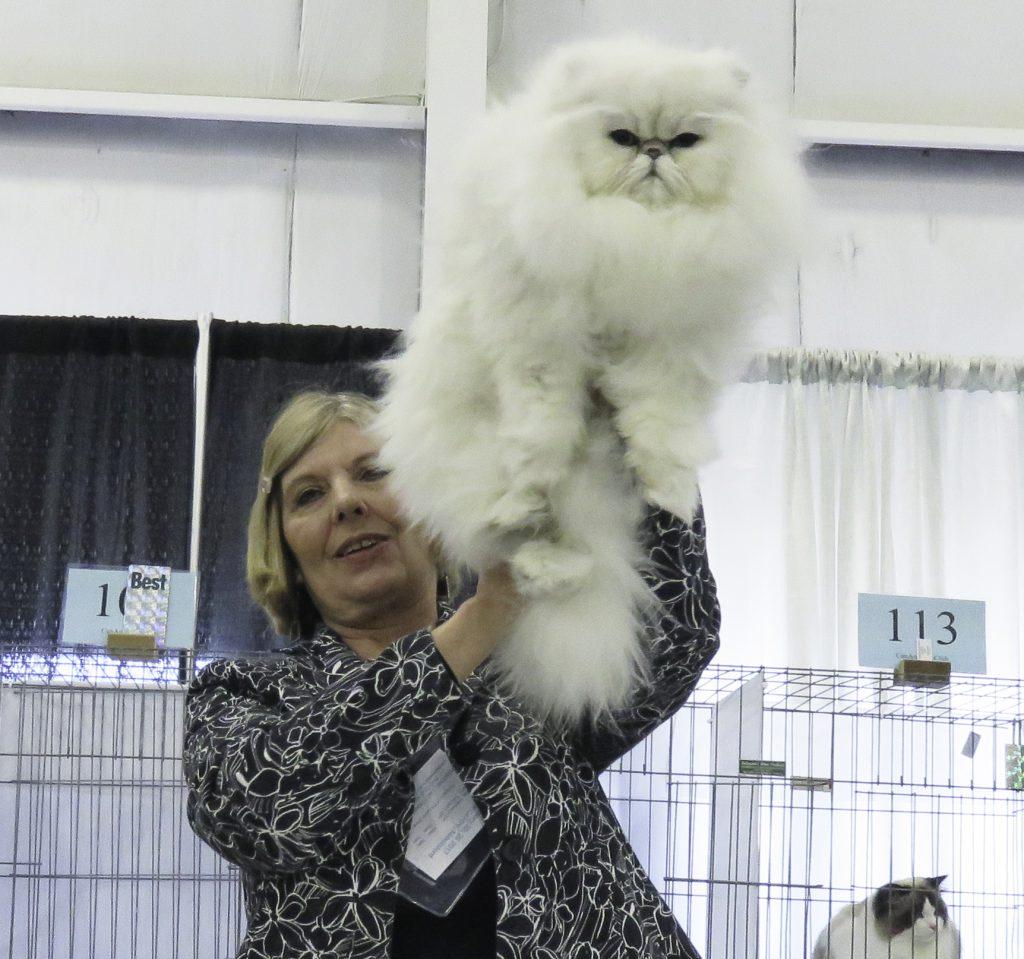 Best Cat.IMG_4282