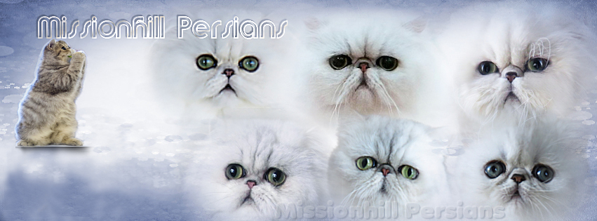 Missionhill Persians