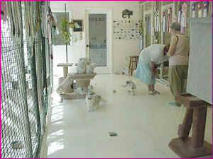 The_Main_Cattery[1]
