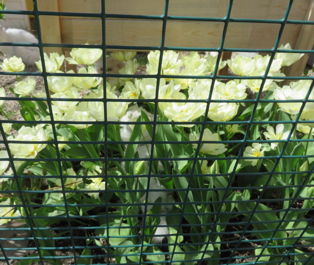cat garden 2017.IMG_4595
