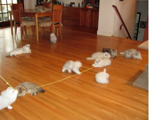 Nursery_-_Kittens_at_Play