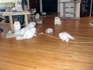 WEB-Cats_at_play_2012