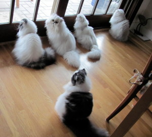 WEB-Cats_at_window_2012